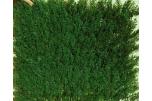 Plaques Thuya Vert Foncé