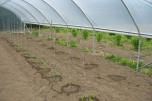 Kit 2 aérations latérales pour serre Jardin Couvert