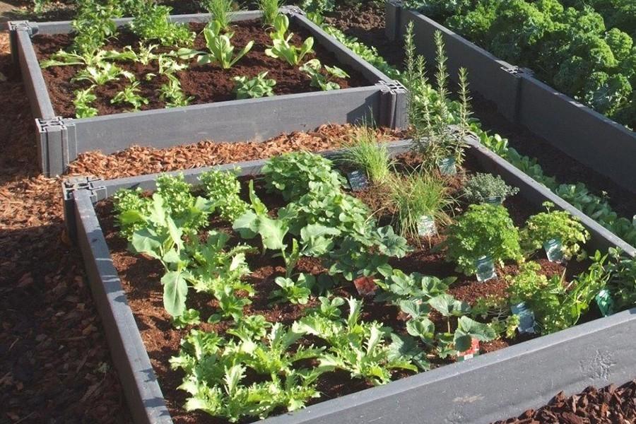Carré Potager Recyclé Écologique - Jardin Couvert
