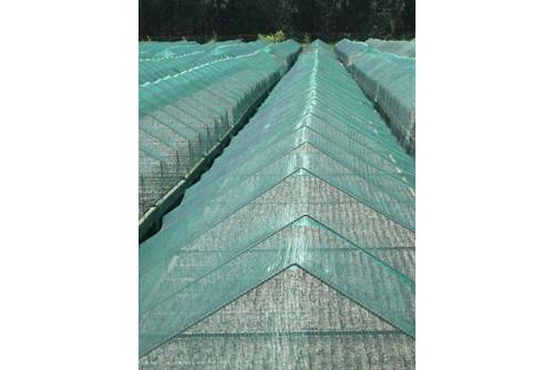 Filet anti-grêle 2 m x 100 m