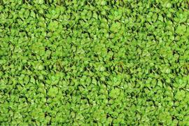Treillis feuilles de rosier