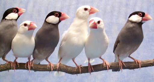 oiseaux becs droit