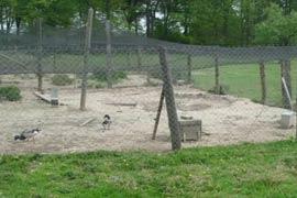 Filets anti-oiseaux, volières